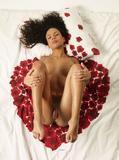 Gabriella heart of rosest10wpmkpme.jpg